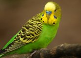What to do if the parrot is poisoned