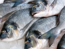 Botulism in fish