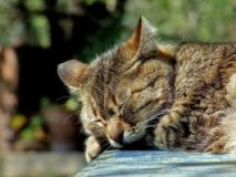 Poisoning in cats - symptoms and treatment at home